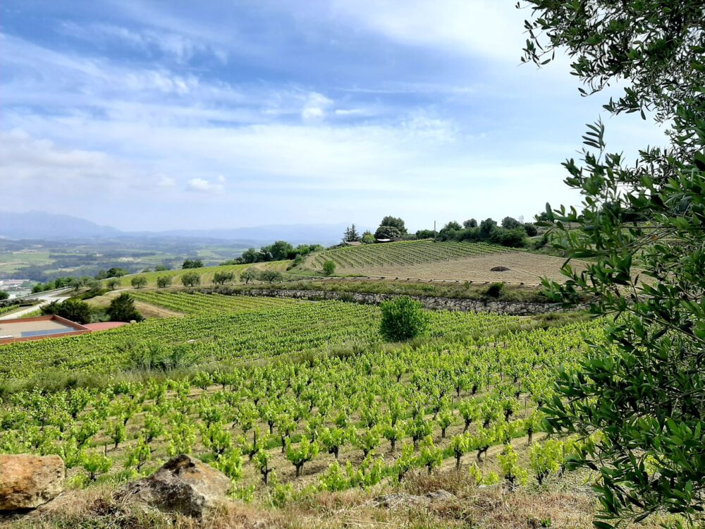 Ecological winery Sitges tour