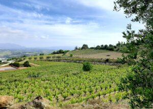 Penedes_Vineyards_wine_tours