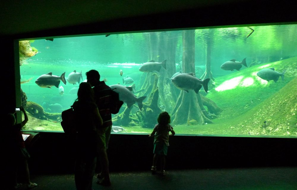 Cosmocaixa Barcelona Science Museum for children