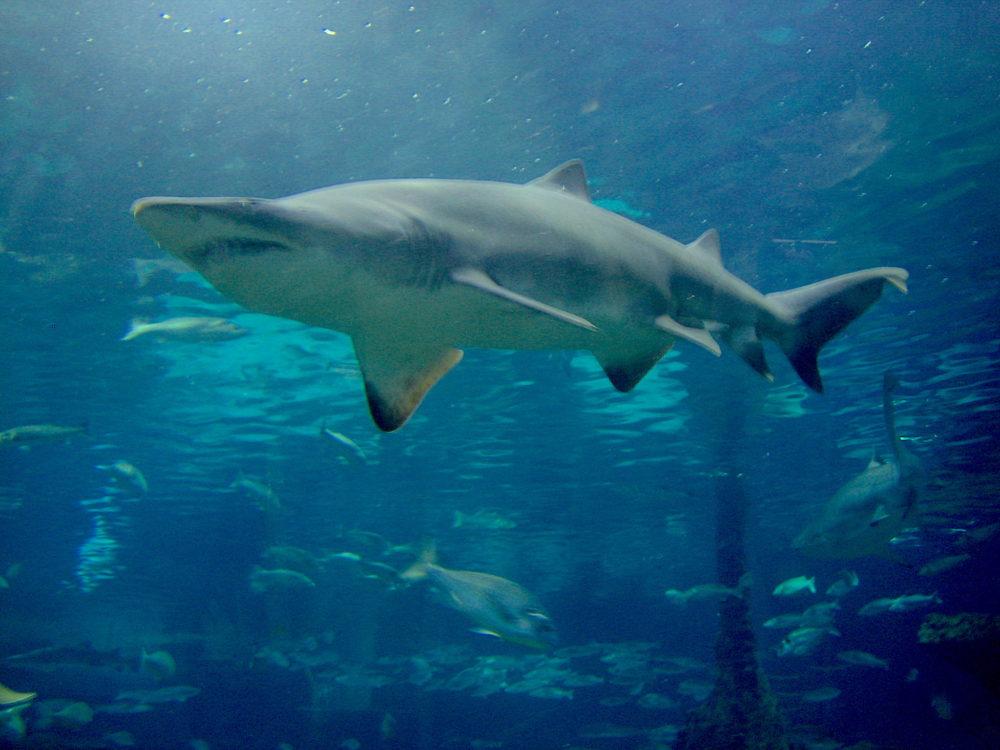 Aquarium Barcelona familias niños